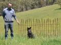 Wheat fence panel