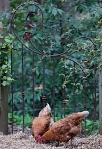 Back garden gate